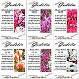 6 Packets Combo x CLARKIA GODETIA AZALEA Flower Seeds - Clarkia amoena - 6 Individual Packets - By MySeeds.Co