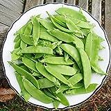 David's Garden Seeds Pea Snow Mammoth Melting Sugar SL1119 (Green) 100 Non-GMO, Heirloom Seeds