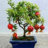100pcs pomegranate seeds mini pomegranate tree seeds very sweet Delicious fruit seeds bonsai fruit plant for home garden