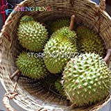 New Arrival 10pcs Durian Seeds the King Of Fruit High-nutrition home Rare true MINI Outdoor Tree Seed Germ Planting Funny Bonsai