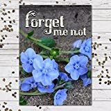 Chinese Forget-Me-Not Seed Packet Favors (F07) Forget Me Not