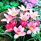 Hot Sale! 100pcs/ Lot Zephyranthes Candida Seeds (onion Orchid Flowe) Mini Easy Planting Balcony Fun Indoor Flore Pots seeds of hope