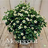 100 Seeds Exacum Affine Seeds Exacum affine Seeds Fragrant Plant Seeds Home & Garden 1 #32706319935ST