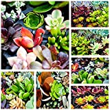 Shop Succulents | Assorted Collection of Live Succulent Cuttings, Hand Selected Variety Pack of Cut Succulents, All Cuttings are of Unique Varieties| Collection of 10