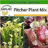 SAFLAX - Pitcher Plant Mix - 10 Seeds - with Soil - Sarracenia Flava/S. purpurea - Mix
