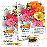 "Seed Needs, Portulaca""Double Mix"" (Moss Rose) Twin Pack of 1,000 Seeds Each"