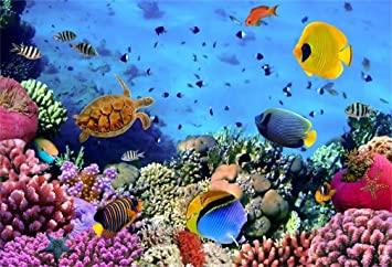 Amazon Com Aofoto 5x3ft Under Sea Seabed World Backdrop Underwater Scene Colorful Marine Coral Fishes Aquarium Photography Background Diving Holiday Photo Studio Props Kid Girl Baby Child Infant Boy Portrait Camera