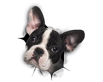 Winston Bear 3d Hund Aufkleber 2er Pack Schwarzweiß Französische Bulldogge Aufkleber Für Wand Kühlschrank Frenchie Aufkleber