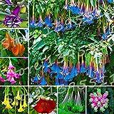 100pcs Bonsai flower Brugmansia Datura seeds Rare flower seeds Potted plants Home & Garden