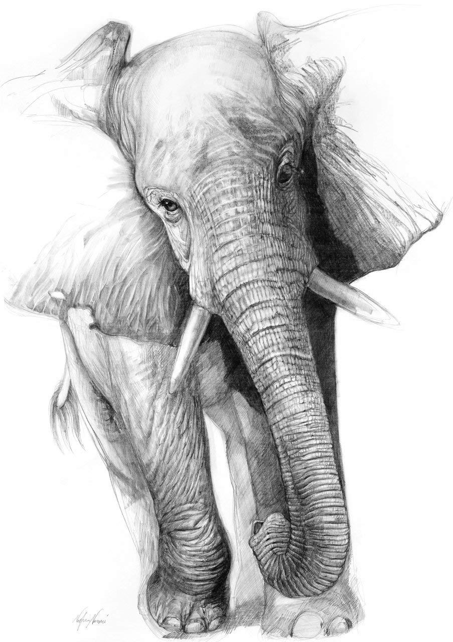 Amazon Com African Elephant Print From Original Drawing By Award Winning Artist Nafisa Nafisa Collections Handmade