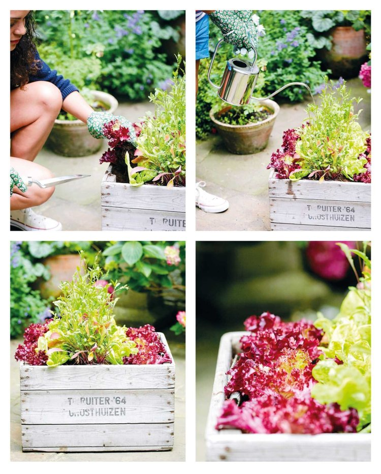 The Balcony Gardener Creative Ideas For Small Spaces Palmer Isabelle 9781782495529 Amazon Com Books