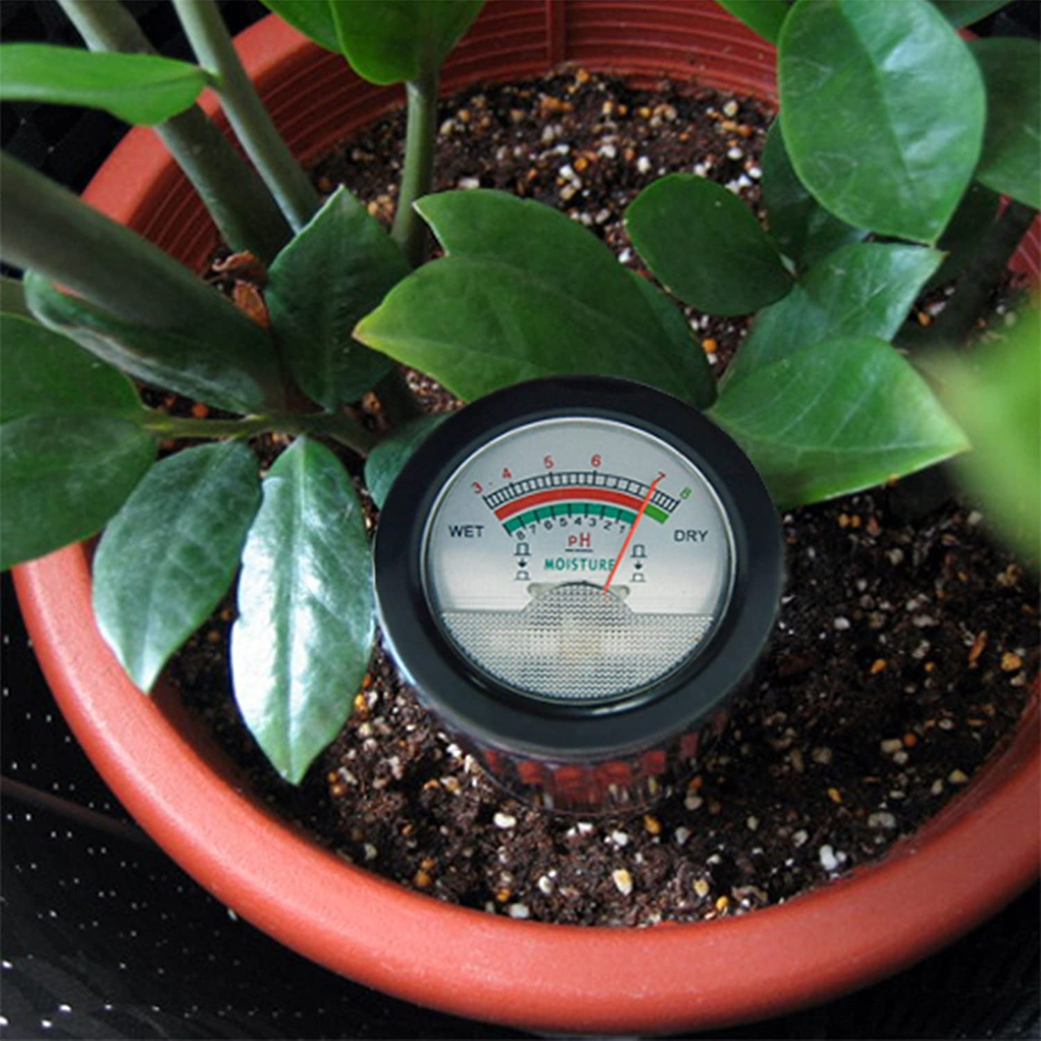 Test The Soil And Moisture In The Plant