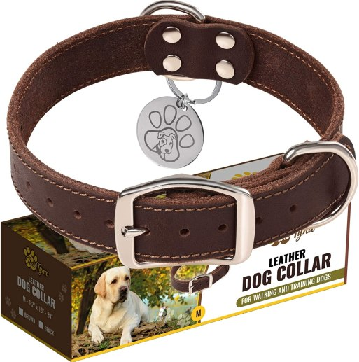 81DrO2KapFL. AC SL1500 What Are The Best Collars For French BullDogs – Your Beloved Pet?