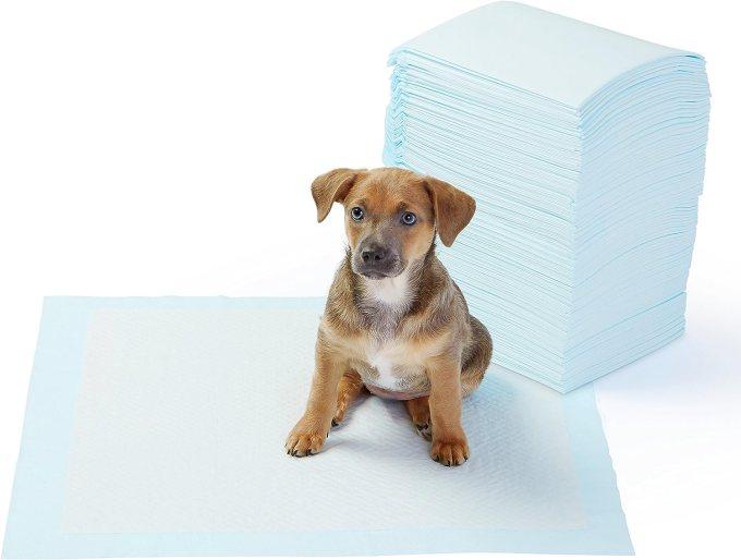 「子犬 トイレトレーニング」の画像検索結果