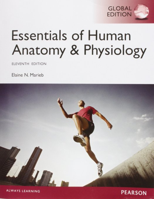 Essential Of Human Anatomy And Physiology 11th Edition Pdf ...