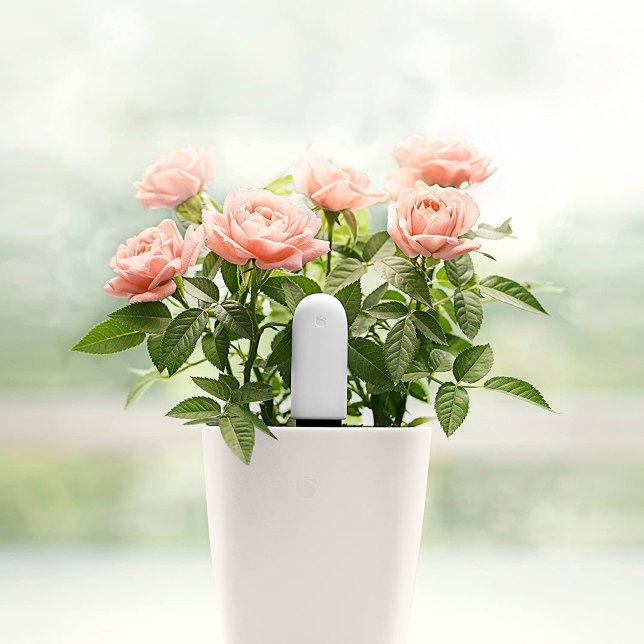 Xiaomi HHCC Plant Flower Smart Monitor