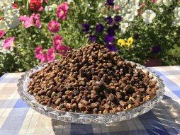 Pain d'abeille, Perga, pollen d'abeille fermenté, cru et naturel, sans agent de conservation