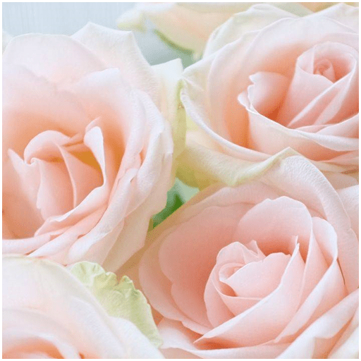 Amazon Com Beautiful Flower Wallpaper Appstore For Android