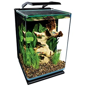 Top 10 best betta fish tanks reviews like an expert for Betta fish tanks amazon