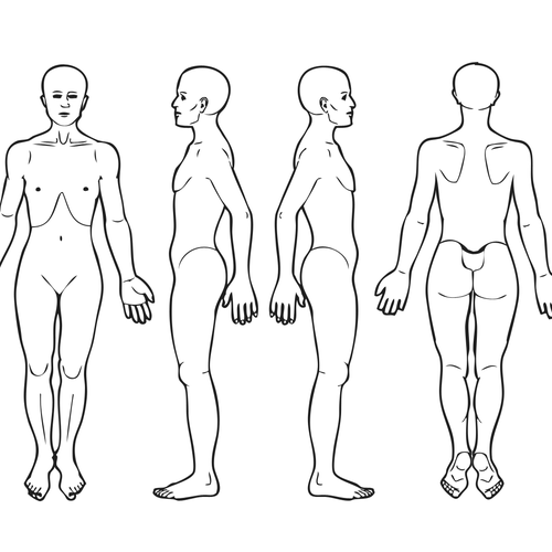 Body Diagram for Professional Massage Chart: front, back