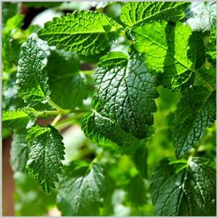 10 Simple Herbal Remedies from Your Garden