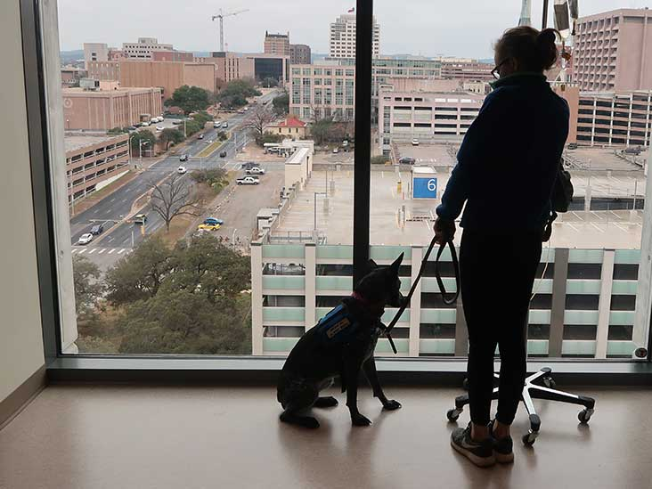 Can You Get a Service Dog for Depression? How to Qualify and