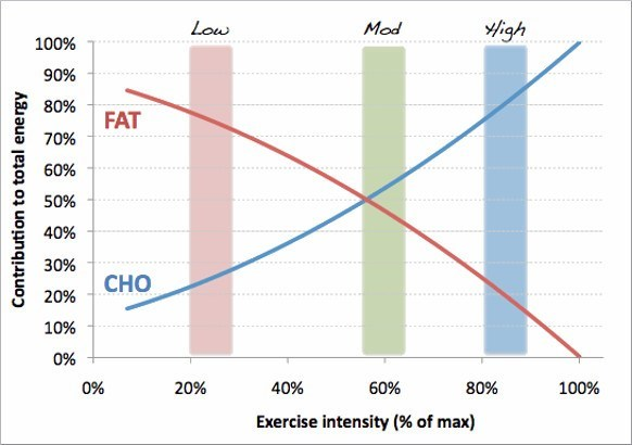 Fat as Fuel During Exercise Graph