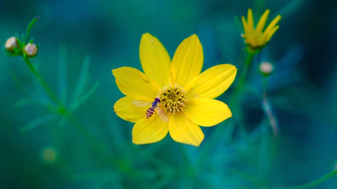 Top 11 Health Benefits of Bee Pollen