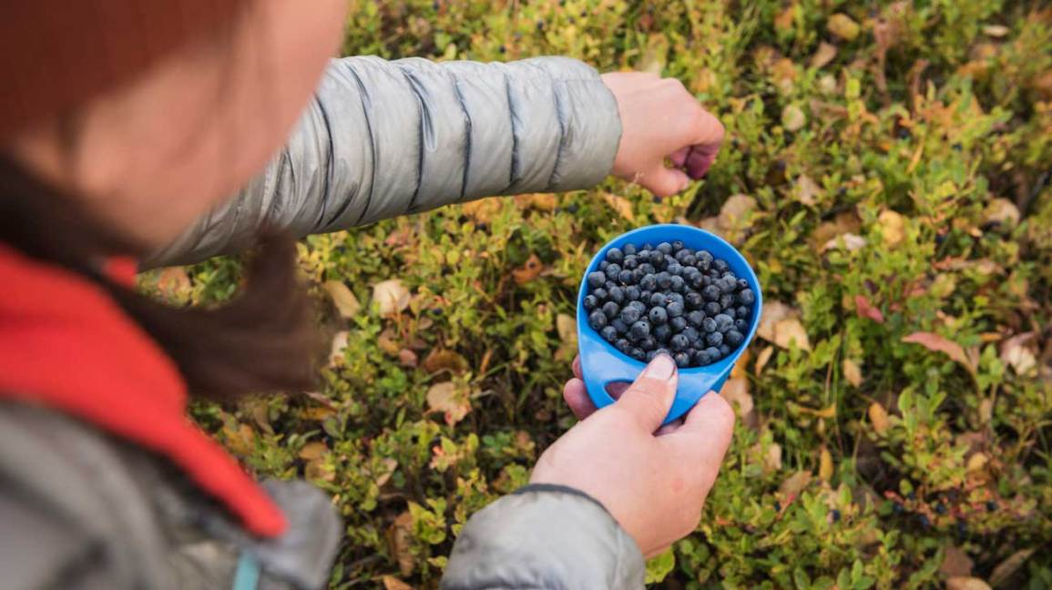 9 Emerging Health Benefits Of Bilberries