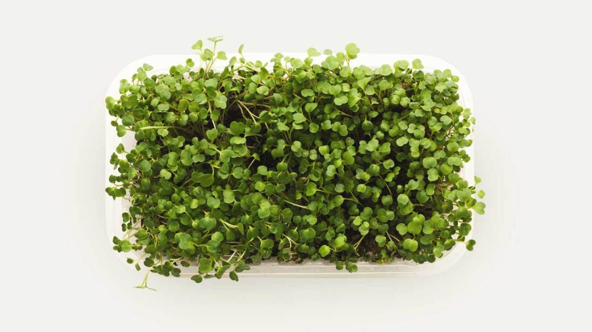 Microgreens in a Plastic Container