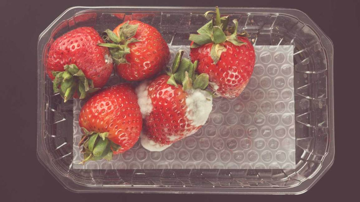Moldy Strawberries in a Box