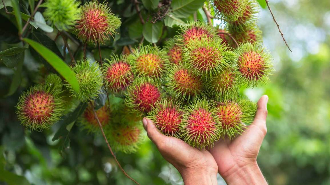 Rambutan Fruit: Nutrition, Health Benefits and How to Eat It