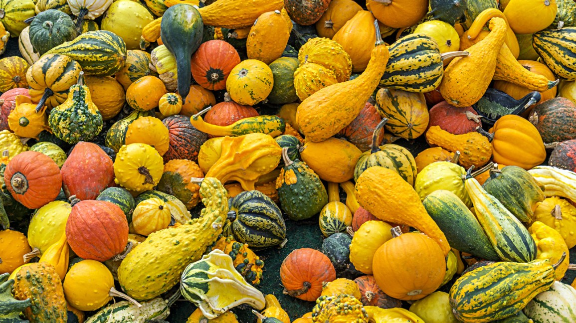 Squash Fruit or Vegetable