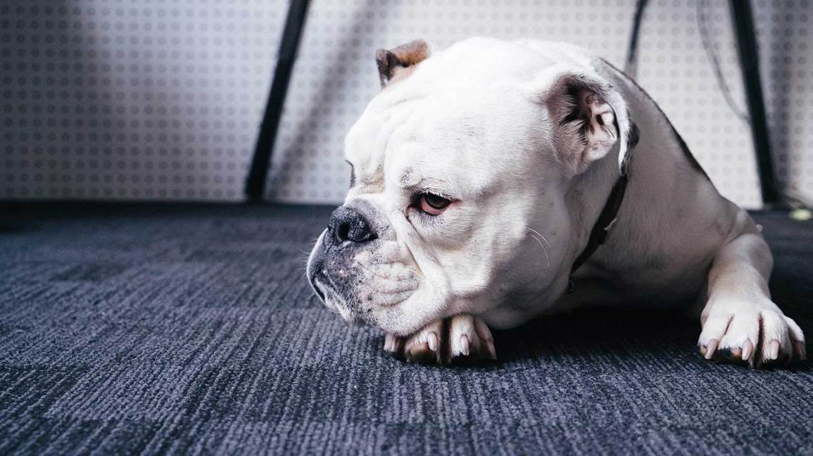 When Does Keeping Your Sick Pet Alive Become 'Too Much'?