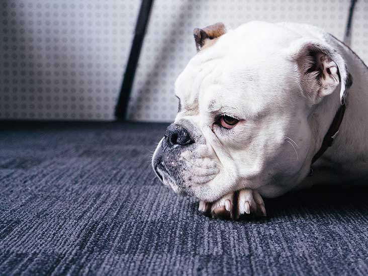 Pet Death: Emotional Difficulty for People