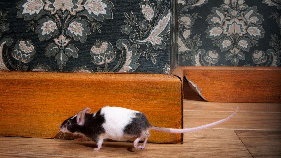 6191152ff86 Antibiotic Resistant Bacteria in Mice