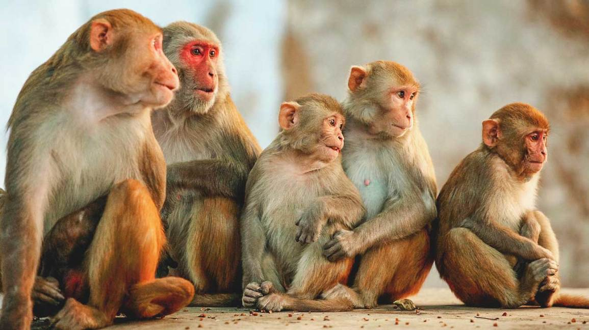 Images of Monkeys for Kids Learning | Activity Shelter