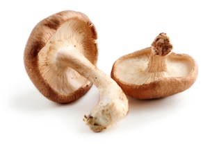 In First Human Trial, Mushroom Extract Cures HPV Infections