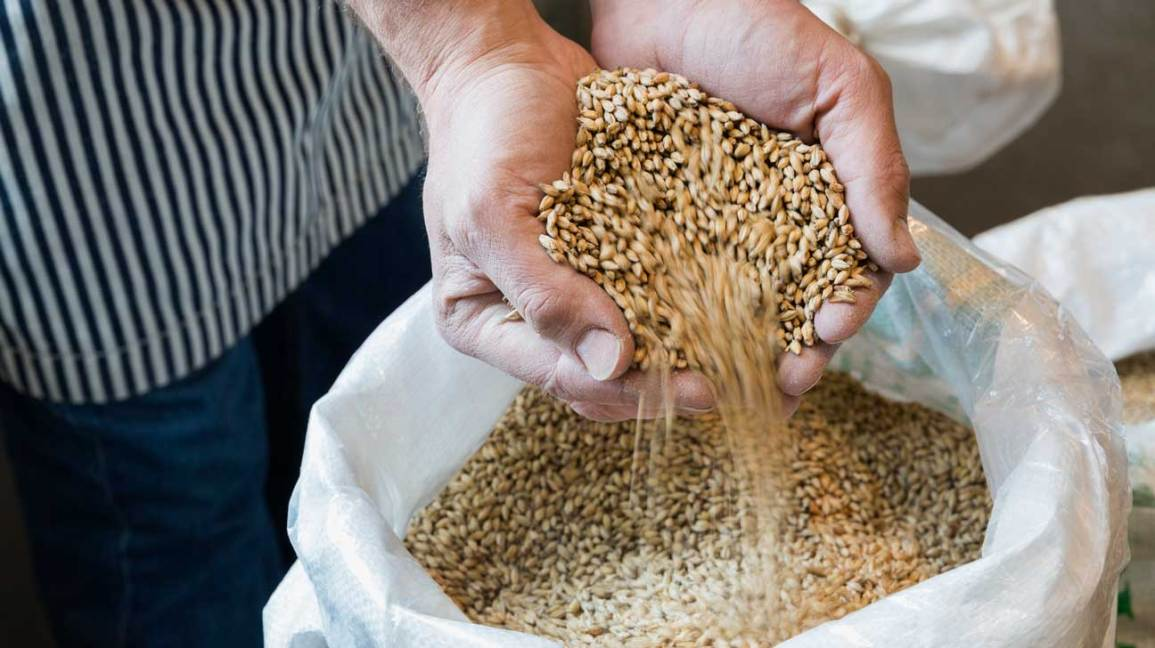 9 Impressive Health Benefits of Barley