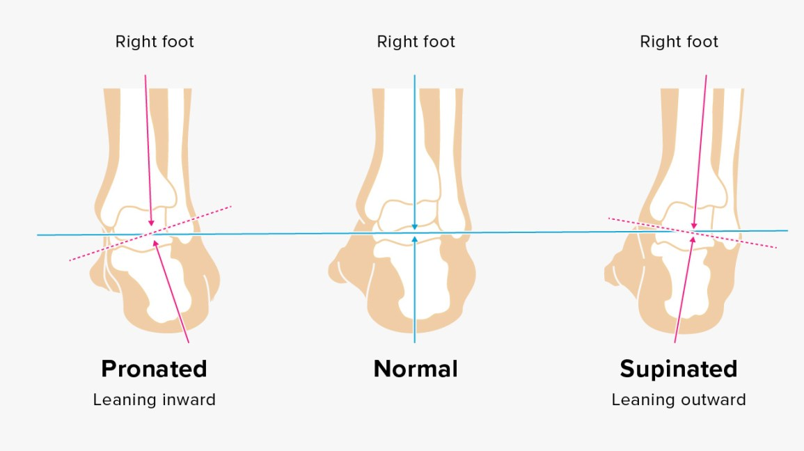 Foot And Ankle Diagram