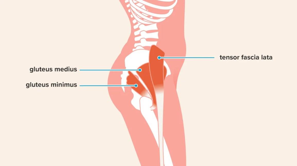 Hip Abduction Exercises: Anatomy, Benefits, Effectiveness