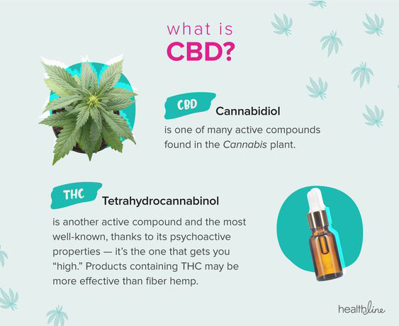 Why do people use CBD Oil?-Growers ...