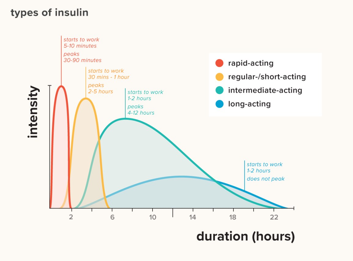Types of insulin chart duration comparison and more