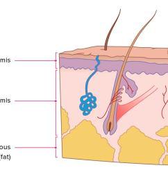 body diagram skin cancer [ 1296 x 728 Pixel ]