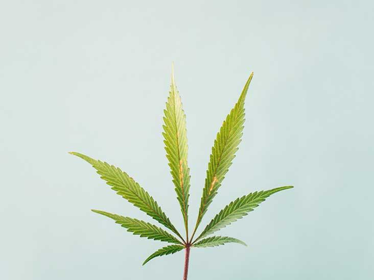 Your Beginner Guide to Marijuana Strains