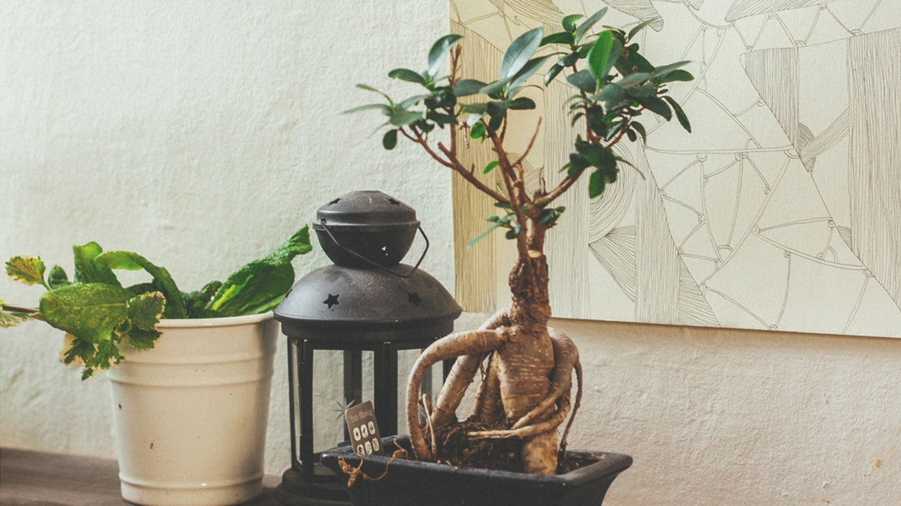 Natural Ways to De-stress and Find Your Zen