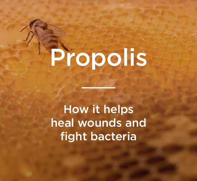 Propolis: Benefits, Uses, and More