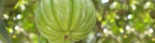 29 Things You Didn T Know About Garcinia Cambogia