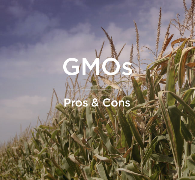 genetically modified food pros and cons essay