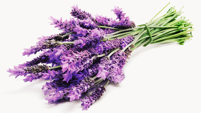 What Lavender Can Do For You